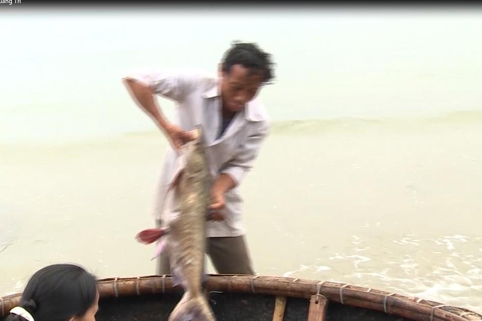 Điều tra nguyên nhân cá chết hàng loạt ở ven biển miền Trung - Ảnh 3