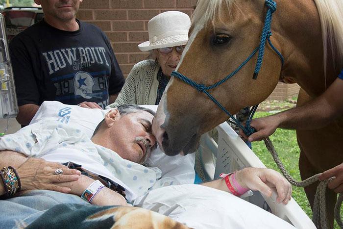Cảm động chú ngựa trung thành vượt 240 km để đến hôn tạm biệt chủ nhân - Ảnh 1