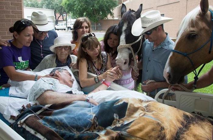 Cảm động chú ngựa trung thành vượt 240 km để đến hôn tạm biệt chủ nhân - Ảnh 2