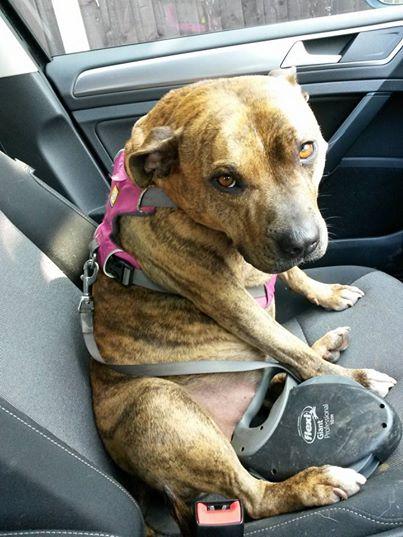 Nỗi buồn của chú chó cô đơn nhất nước Anh - Ảnh 3