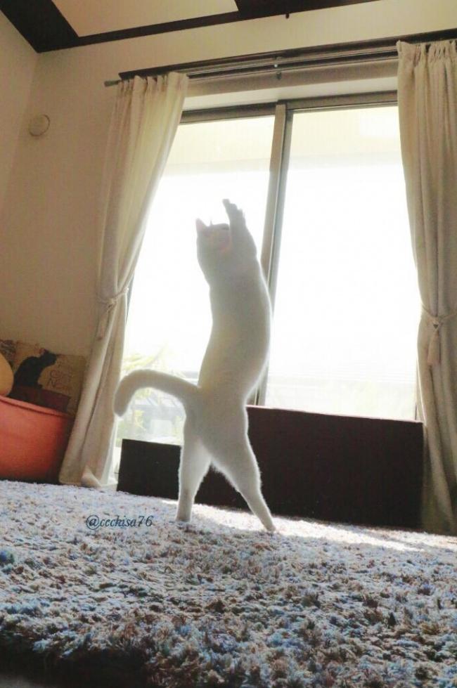 """Bất ngờ hình ảnh chú mèo duyên dáng nhất thể giới """"biểu diễn"""" ballet - Ảnh 1"""