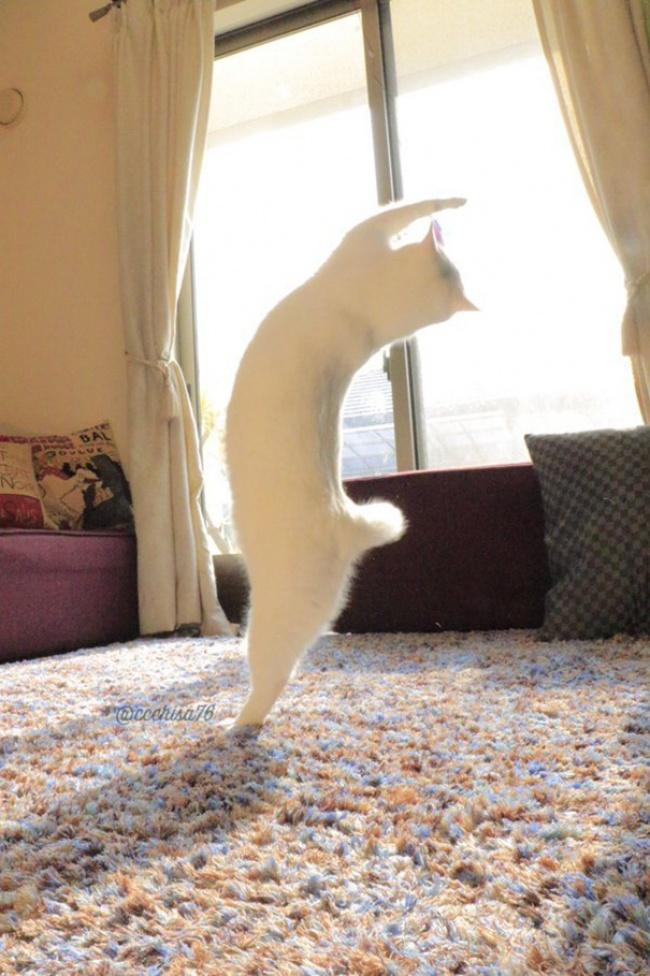 """Bất ngờ hình ảnh chú mèo duyên dáng nhất thể giới """"biểu diễn"""" ballet - Ảnh 2"""