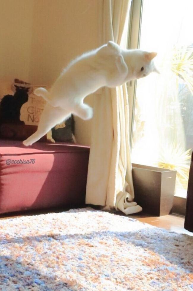 """Bất ngờ hình ảnh chú mèo duyên dáng nhất thể giới """"biểu diễn"""" ballet - Ảnh 3"""