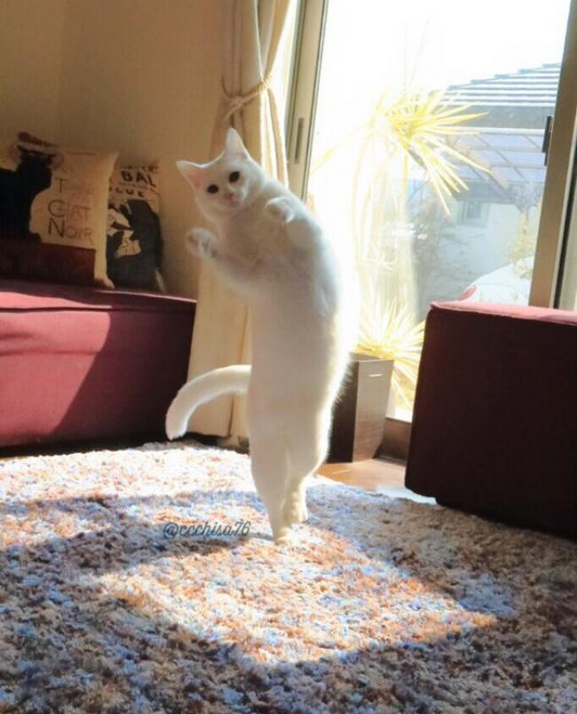 """Bất ngờ hình ảnh chú mèo duyên dáng nhất thể giới """"biểu diễn"""" ballet - Ảnh 5"""