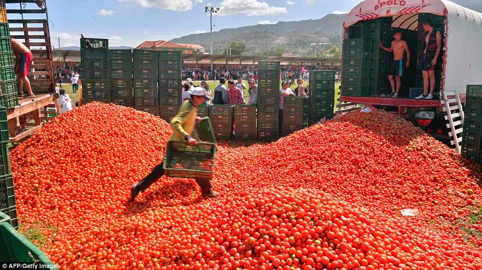 """Choáng ngợp trước màn """"tắm"""" cà chua của 20.000 người trong Festival Tomatin - Ảnh 2"""