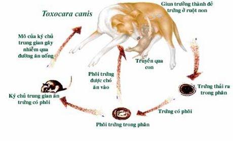 Cẩn thận với những bệnh con người dễ lây từ chó, mèo - Ảnh 4