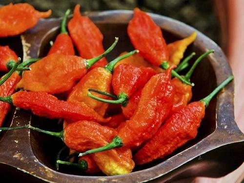 Thực quản rách toạc do ăn loại ớt ma cay nhất thế giới - Ảnh 1