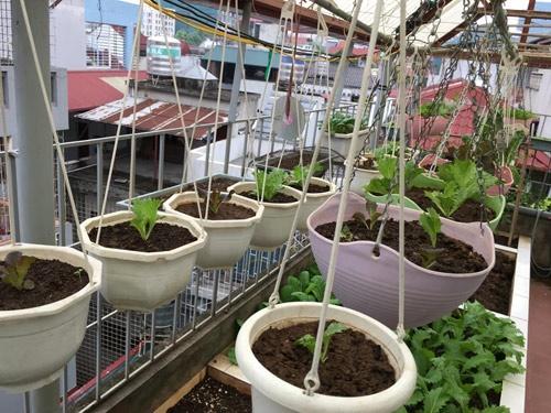 Vườn rau 50m2 ăn không xuể của bà mẹ Hà thành - Ảnh 2
