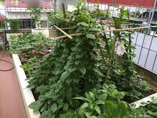 Vườn rau 50m2 ăn không xuể của bà mẹ Hà thành - Ảnh 11