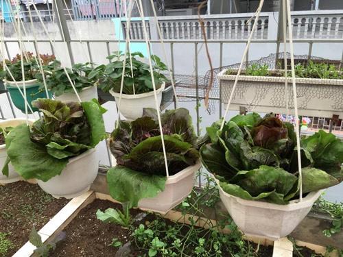 Vườn rau 50m2 ăn không xuể của bà mẹ Hà thành - Ảnh 12