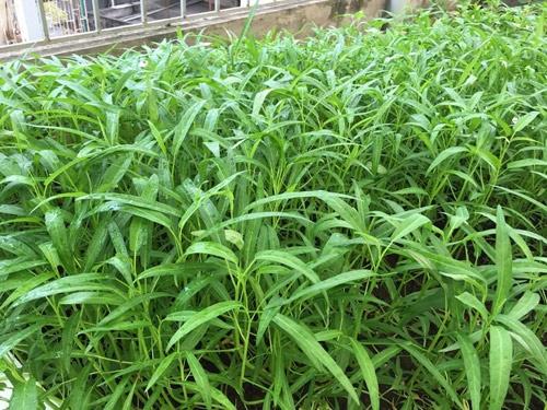 Vườn rau 50m2 ăn không xuể của bà mẹ Hà thành - Ảnh 5