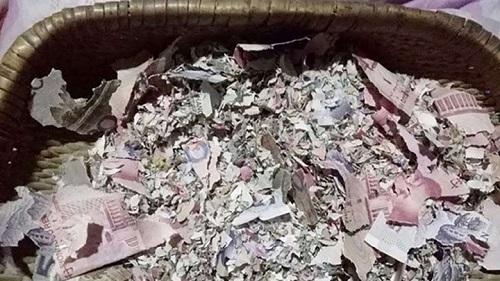 Giấu toàn bộ tiền trong hang, cả gia đình rớt nước mắt khi lôi tiền ra - Ảnh 1