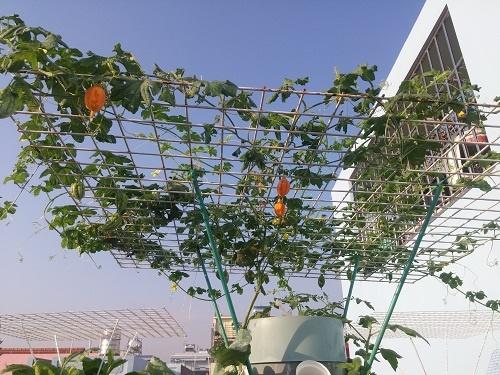Ông bố Sài thành trồng rau sạch kiểu mới - vừa nhiều mà chẳng tốn diện tích - Ảnh 9
