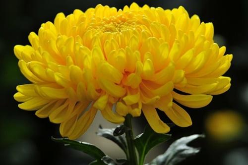 Những loài hoa 'gọi' mùa thu về - Ảnh 4