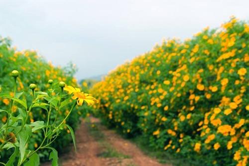 Những loài hoa 'gọi' mùa thu về - Ảnh 5