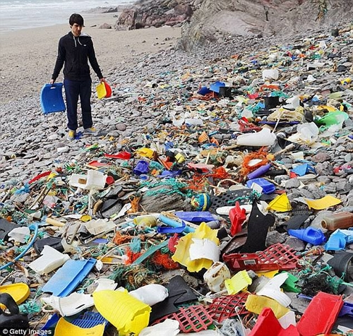 Cảnh báo tình trạng ngao sò biển nửa thế giới nhiễm chất dẻo công nghiệp - Ảnh 2