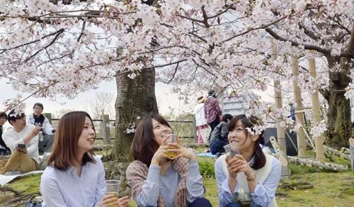 Mặt trái ảm đạm của mùa hoa anh đào rực rỡ ở Nhật Bản - Ảnh 2