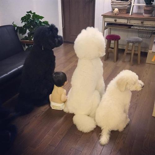 Tan chảy trước chùm ảnh đáng yêu về em bé và chó - Ảnh 12