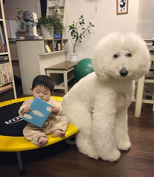 Tan chảy trước chùm ảnh đáng yêu về em bé và chó - Ảnh 13