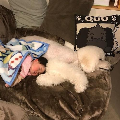 Tan chảy trước chùm ảnh đáng yêu về em bé và chó - Ảnh 5