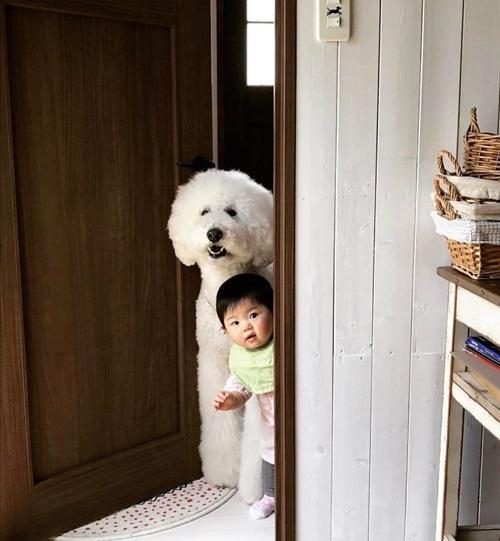 Tan chảy trước chùm ảnh đáng yêu về em bé và chó - Ảnh 6
