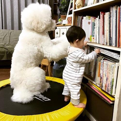 Tan chảy trước chùm ảnh đáng yêu về em bé và chó - Ảnh 10