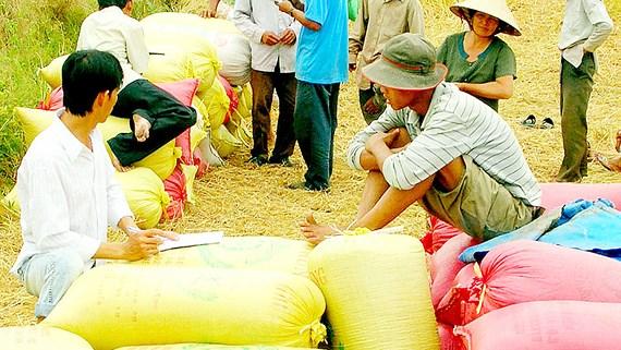 Được 'cởi trói', hạt gạo dự tính mang về cho Việt Nam hơn 3 tỷ USD - Ảnh 2