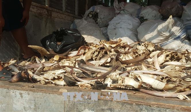 Hưng Yên: Bắt giữ 2 xe ô tô chở 6,5 tấn xương động vật bốc mùi hôi thối - Ảnh 1
