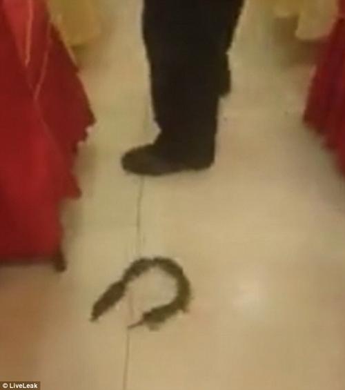 """Thực khách náo loạn khi cả chục con chuột chơi """"rồng rắn lên mây"""" tại nhà hàng - Ảnh 2"""