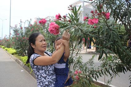 Nhà trồng cây cảnh: Cẩn trọng với những cây đẹp nhưng độc khiến cả nhà hôn mê - Ảnh 2
