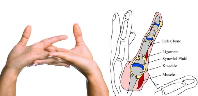 Thói quen bẻ khớp ngón tay có hại hay vô hại? - Ảnh 2