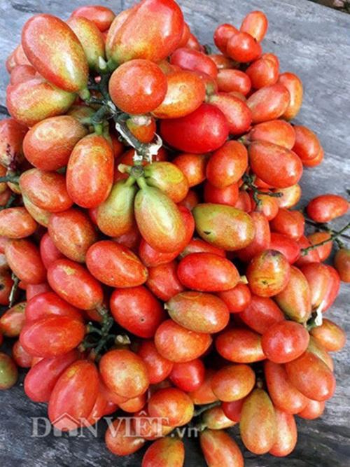 Quả máu, đặc sản trái cây rừng kì lạ của Quảng Ninh - Ảnh 3