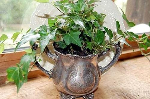 Lợi ích sức khỏe bất ngờ từ những cây cảnh trồng trong nhà - Ảnh 2