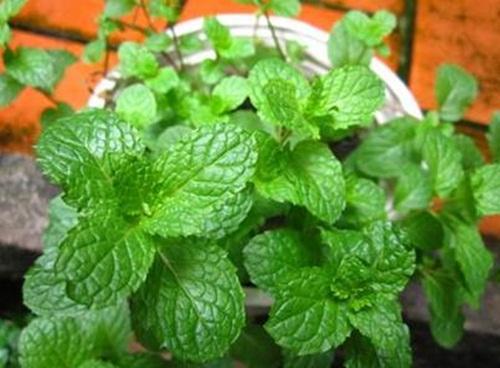Lợi ích sức khỏe bất ngờ từ những cây cảnh trồng trong nhà - Ảnh 3