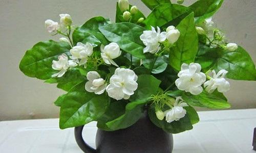 Lợi ích sức khỏe bất ngờ từ những cây cảnh trồng trong nhà - Ảnh 4