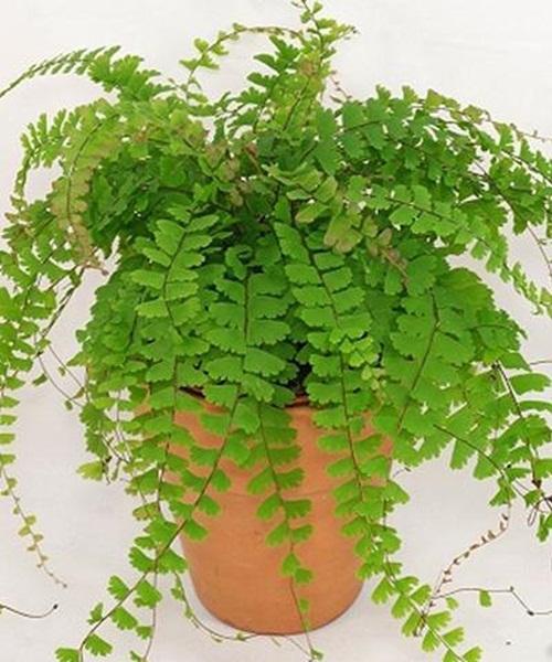 Lợi ích sức khỏe bất ngờ từ những cây cảnh trồng trong nhà - Ảnh 7