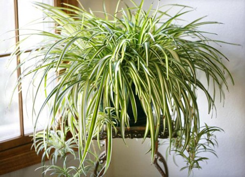 Lợi ích sức khỏe bất ngờ từ những cây cảnh trồng trong nhà - Ảnh 8