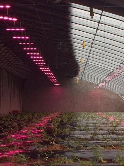 Trồng cây bằng điện, giải pháp nông nghiệp sạch mới - Ảnh 2