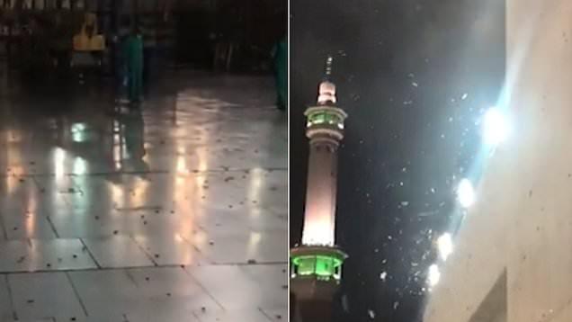 """Côn trùng ồ ạt """"tấn công"""" thánh địa Hồi giáo Mecca - Ảnh 1"""