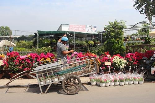 Sa Đéc: Hoa Tết tăng giá, người trồng phấn khởi vì trúng đậm - Ảnh 3