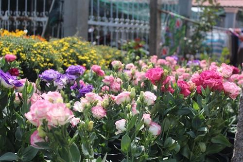 Sa Đéc: Hoa Tết tăng giá, người trồng phấn khởi vì trúng đậm - Ảnh 4