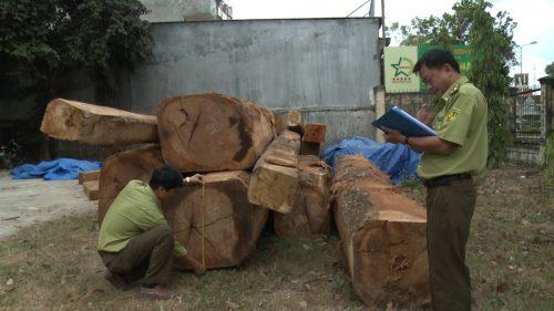 Phát hiện bãi gỗ lớn giấu gần kho doanh nghiệp ở Kon Tum - Ảnh 1