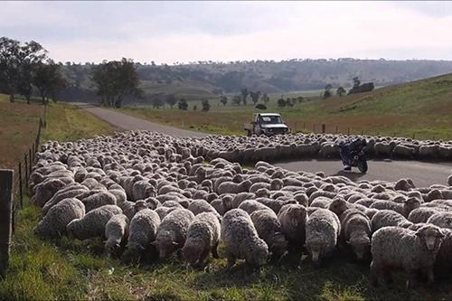 Các quy định tham gia giao thông kỳ lạ trên thế giới - Ảnh 6