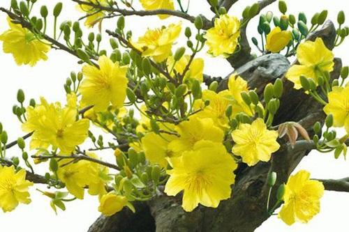Những loài hoa đẹp và ý nghĩa không phải ai cũng biết trong ngày Tết - Ảnh 2