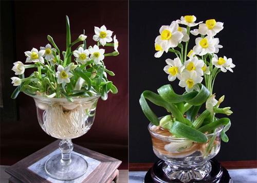 Những loài hoa đẹp và ý nghĩa không phải ai cũng biết trong ngày Tết - Ảnh 3