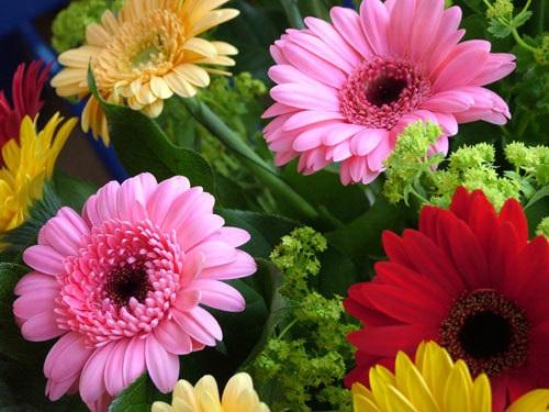 Những loài hoa đẹp và ý nghĩa không phải ai cũng biết trong ngày Tết - Ảnh 4