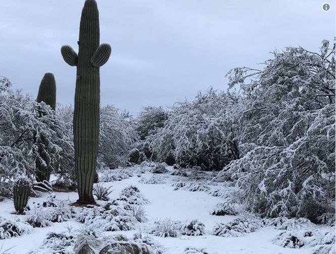 Cảnh tượng ngoạn mục: Tuyết phủ trắng sa mạc tại Mỹ - Ảnh 2