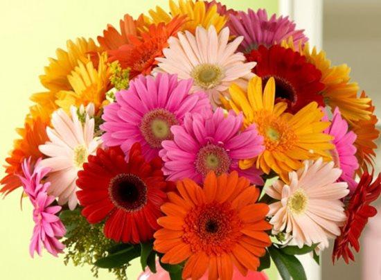 Cách chọn hoa ngày 20 tháng 11 ý nghĩa dành tặng thầy cô - Ảnh 4