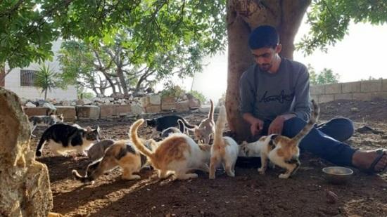 Thị trấn ở Syria, nơi mèo đông hơn người - Ảnh 2