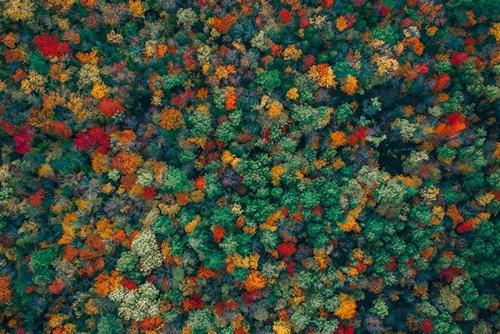 """Ngắm những bức ảnh đẹp mê hồn của cuộc thi """"'Thế giới nhìn từ trên cao"""" - Ảnh 3"""